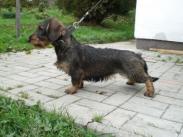 Bessy z Oravskej Magury
